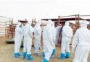 Two New Coronavirus Cases Detected